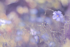 Delicate flowers linen on a lilac background. An artistic image .Soft ,selective focus Royalty Free Stock Images