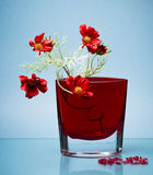 Delicate flowers in red vase on blue Stock Image