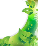 Delicate foliage Stock Image
