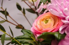 Delicate fresh bouquet of fresh flowers with pink Ranunculus. Background for birthday gifts Royalty Free Stock Image
