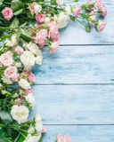 Delicate fresh roses on the blue background. Delicate fresh roses on the blue wooden background Royalty Free Stock Photos