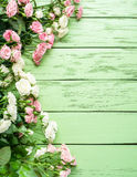 Delicate fresh roses on the green wooden background. Stock Photography