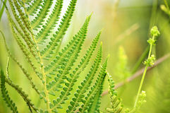 Delicate Green Fern Stock Photo