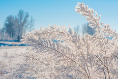 Delicate Hoar Frost on Foliage stock photography