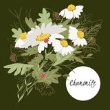 Delicate illustration chamomile flower vector illustration