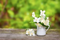 Delicate jasmine flowers in vase on old wooden board. Green blurred background Stock Photography