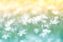 Delicate little white flower on a beautiful background with a gentle tone. Floral background colorful.  Stock Image