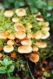 Delicate mushrooms in the forest Stock Photos