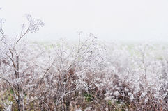 Delicate openwork flowers in the frost and falling snow. royalty free stock images
