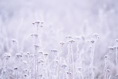 Delicate openwork flowers in the frost. royalty free stock photo