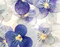 Delicate pastel flowers. Delicate, half translucent dried pansies background with vintage feel Royalty Free Stock Photo