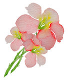 Delicate pattern of spring flowers. Vector. Watercolor Stock Image