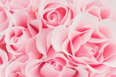 Delicate pink background of blooming roses. Close-up Royalty Free Stock Image