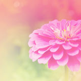 Delicate pink floral background Royalty Free Stock Photo