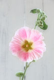Delicate pink flower Stock Photo