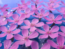 Delicate Pink Flowers on Water Stock Image