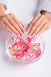 Delicate pink freesia in a bowl with water. Beautiful moon french manicure royalty free stock photo