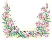 Delicate pink lily. Pencil drawing Royalty Free Stock Images