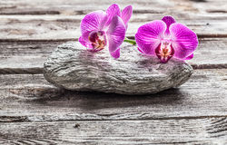 Delicate pink orchids on grey pebble and old texture wood Royalty Free Stock Image