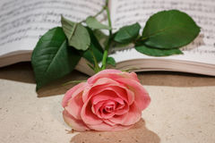 Delicate pink Rose Stock Photography