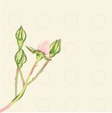 Delicate pink rosebud Royalty Free Stock Photography