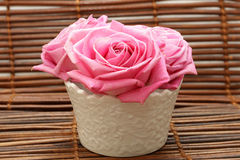 Delicate pink roses Royalty Free Stock Photo