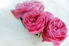 Pink Rose Bouquet Stock Images