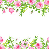Delicate pink roses floral vector background Royalty Free Stock Photos