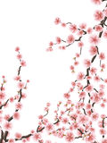 Delicate pink sakura cherry blossoms. EPS 10 Stock Images