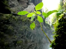 Delicate plant. Delicate little plant in a gorge fighting against the elements stock images