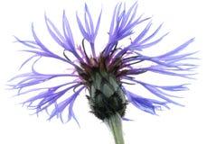 Delicate Purple Flower Stock Photos