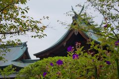 Delicate purple flowers on a bush in front of roof of Japanese temple stock photo