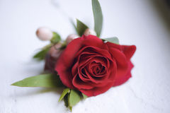 Delicate red rose small bouquet for buttonhole used for groom and wedding guests positioned against a white background Royalty Free Stock Images
