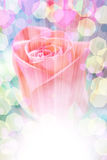 Delicate rose with blurred lights Stock Photo