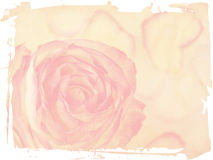 Delicate rose on grunge background. Texture and color processing royalty free illustration