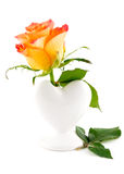 Delicate rose in a vase  on a white background Stock Photos