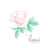 Delicate rose on a white background. Rose of a pastel color for a beloved woman from the collection of a designer Vector Illustration