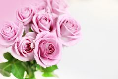 Delicate roses Royalty Free Stock Images