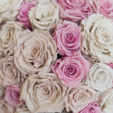Roses. Bouquet of light colored roses Stock Photography