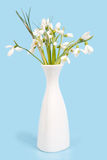 Delicate snowdrops on a blue Stock Image
