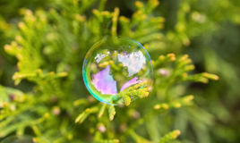 Delicate soap bubble perched gently on an everygreen leaf, beaut royalty free stock photography