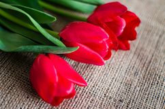 Delicate soft tulips bloom. In spring day Stock Image