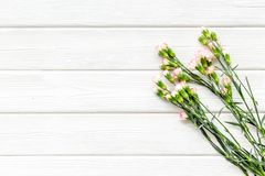 Delicate spring flowers. Small pink carnation on white wooden background top view copy space stock photography