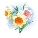 Delicate spring flowers in watercolor. Vector greeting card with delicate spring flowers watercolor Stock Image
