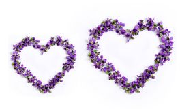 Free Delicate Spring Violets In The Shape Of A Heart On A White Backg Stock Photography - 101285792