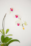 A delicate stem of pink flower stock photography