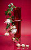 Delicate stem in tall glass vase on pink Stock Images