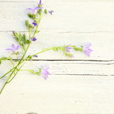 Delicate summer floral background. With sprays of dainty little lilac coloured flowers lying on textured white painted wood with splits and cracks and copyspace Royalty Free Stock Image