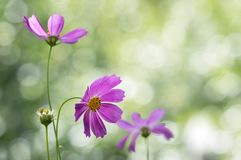 Delicate summer flowers on a beautiful background with bokeh.Selective focus.  Stock Image