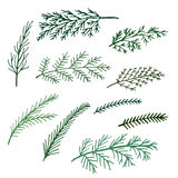 Delicate thin spruce green branches isolated set of  illustration Stock Photography